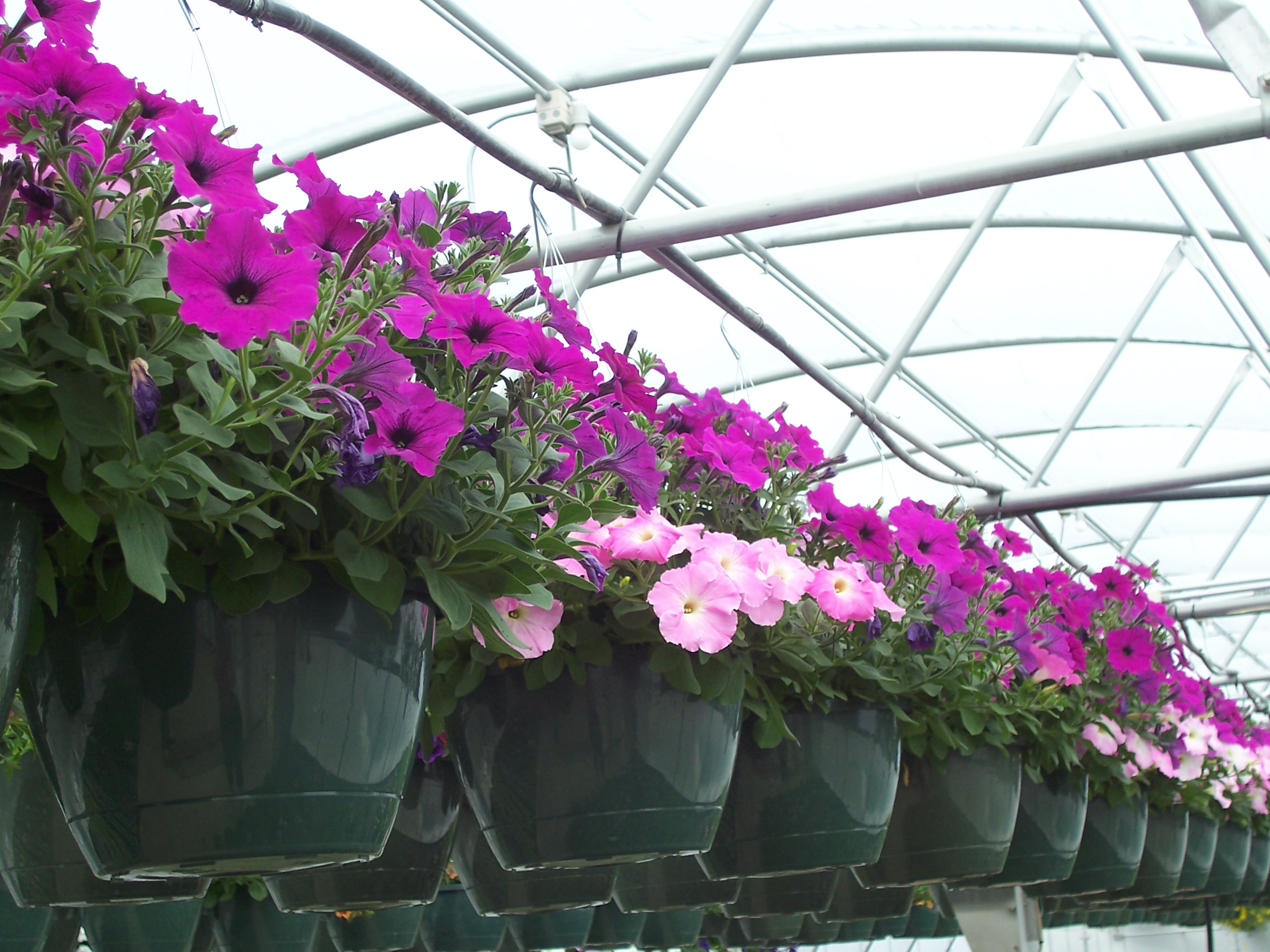 10 inch basket of flowers